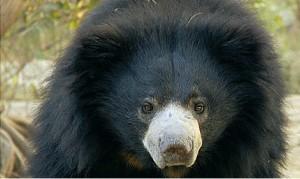 bears_landing